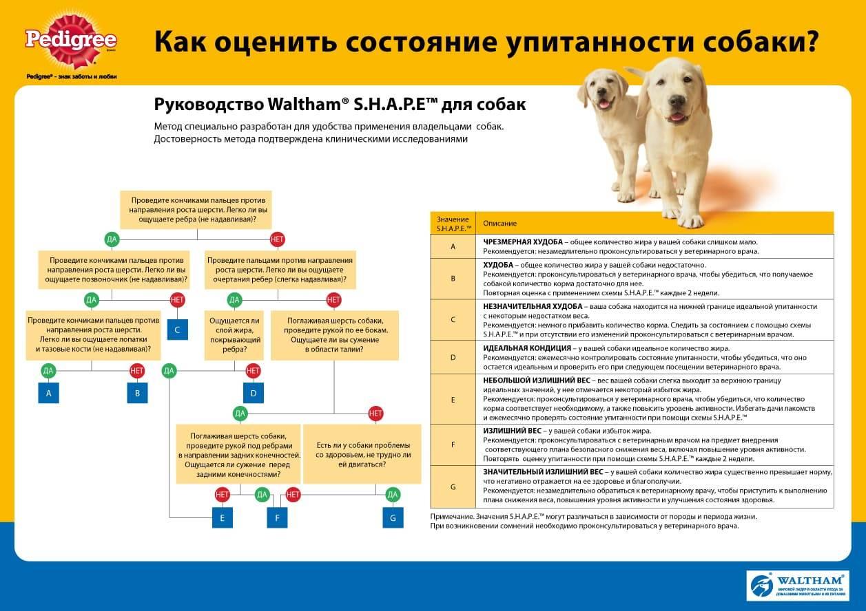 Собака плохо ест, но активная: причины, лечение