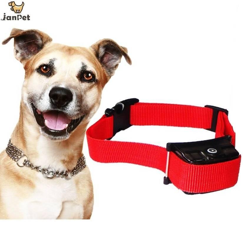 Плюсы и минусы электроошейника для собак: как выбрать ошейник