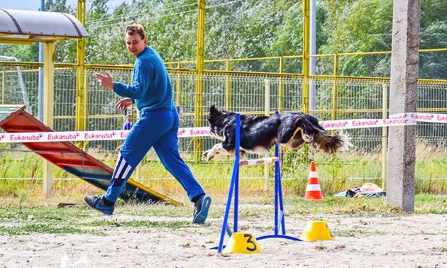 Спорт с собакой: аджилити, фрисби, курсинг и другие виды