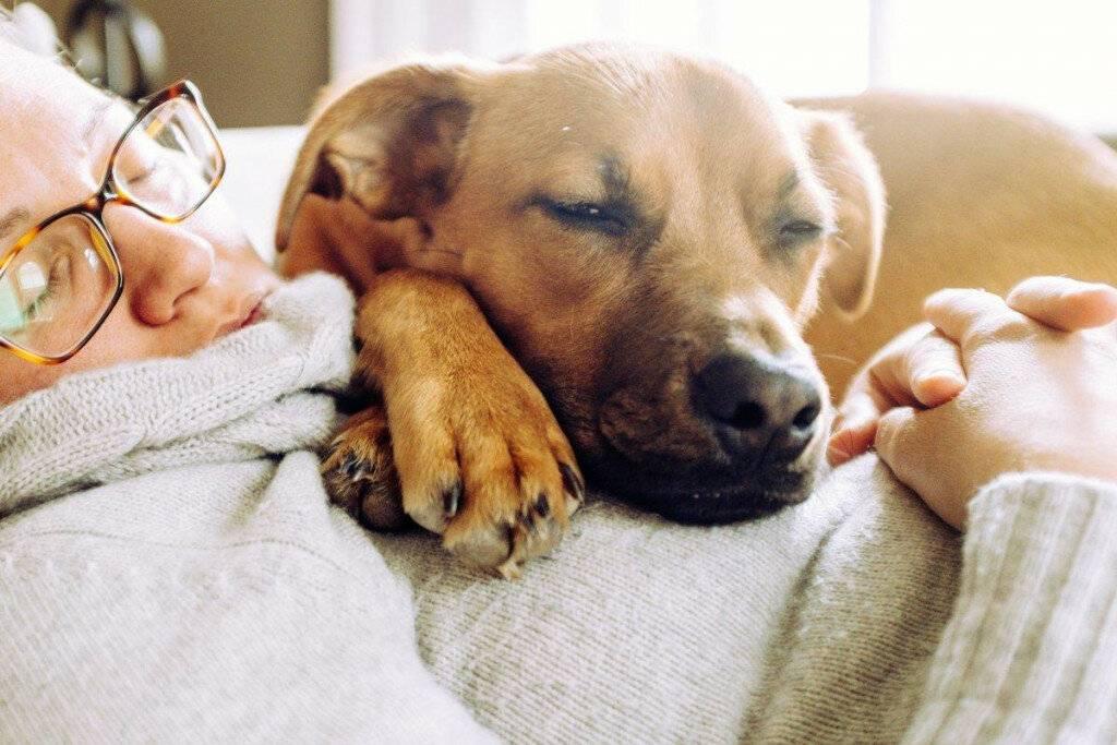 Как отучить собаку метить дома – в квартире, во дворе, все способы