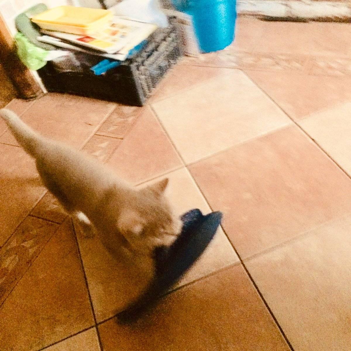 Каким командам можно научить кошку или кота