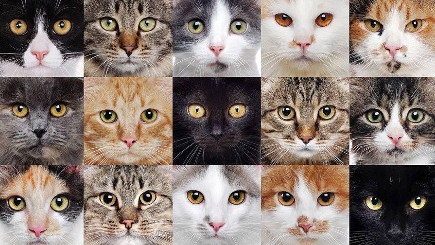 Топ 10 самых дорогих пород кошек! вы точно удивитесь!