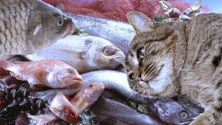 Можно ли кошку кормить рыбой?