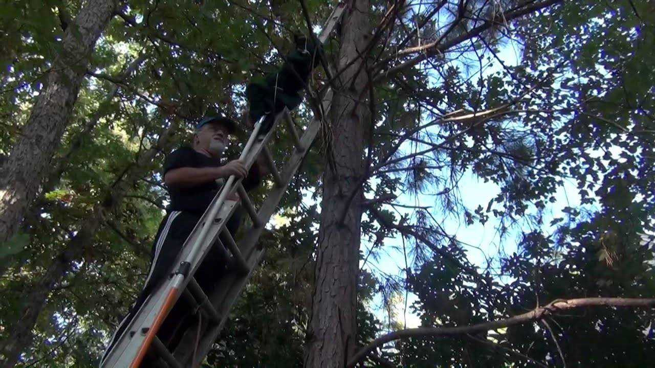 Как снять кота с дерева: самостоятельно или с помощью спецслужб