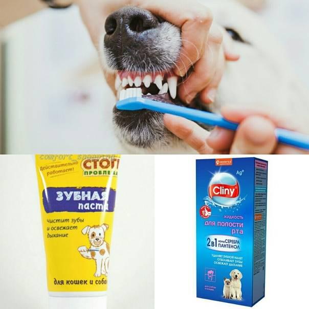 Уход за зубами йорка. как чистить зубы йорку в домашних условиях? йоркширский терьер чистка зубов