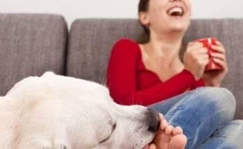 Почему собака вылизывает хозяина: ноги, лицо, руки