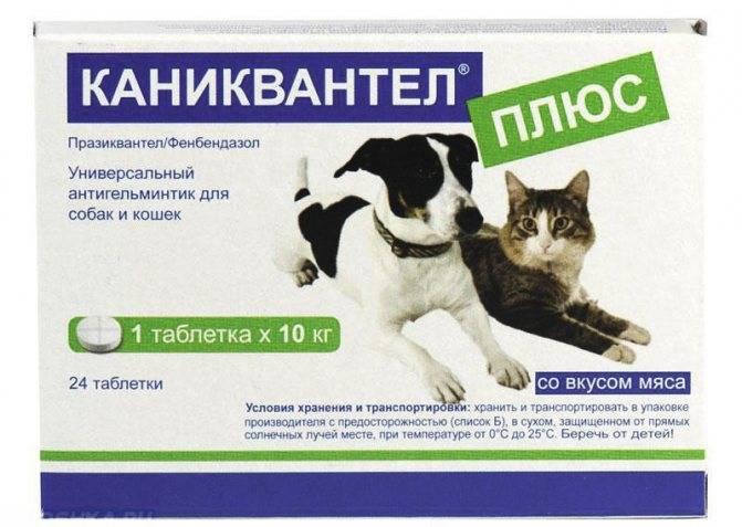 Болезнь от кошек токсоплазмоз у человека - муркин дом