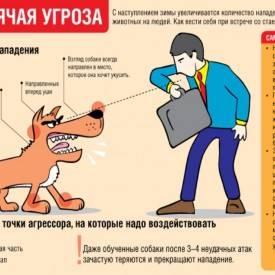 Что делать при нападении собаки или стаи собак | советы кинолога