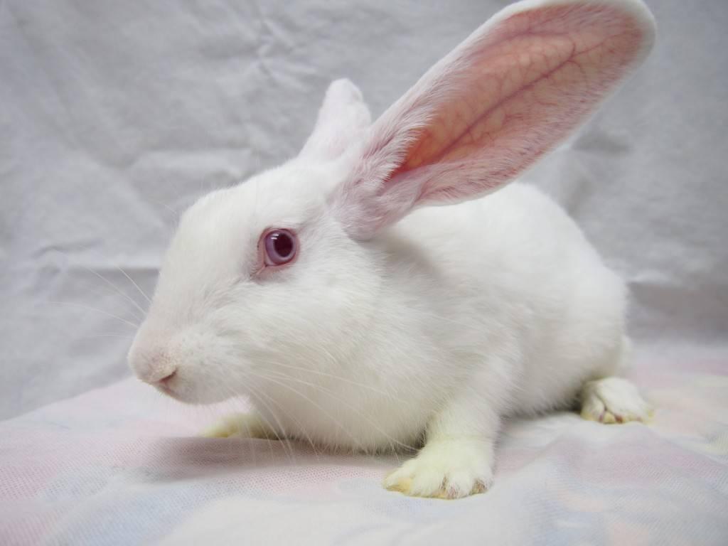 Список кличек кроликов и советы по их выбору