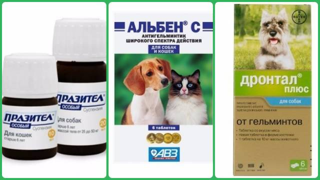 Как правильно дать собаке таблетки от глистов для профилактики?