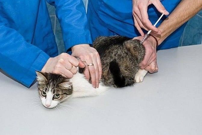 «глобфел 4» для кошек — инструкция по применению