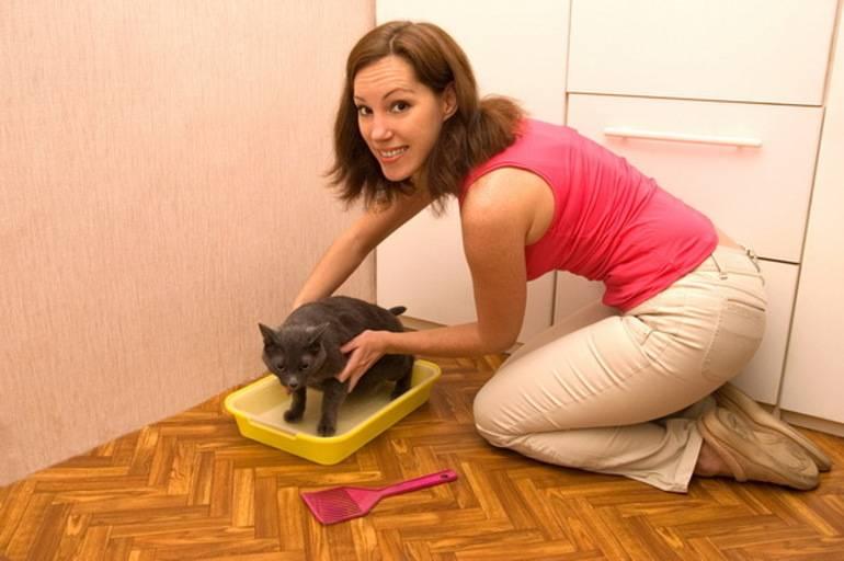 Зачем кошка приносит котят хозяину. инстинкты и поведение кошки