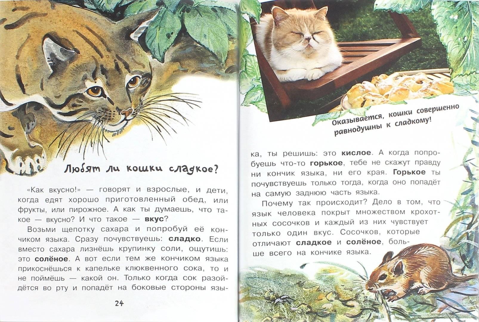 Что будет если отрезать или подстричь кошке усы? отрастают ли усы у котов?