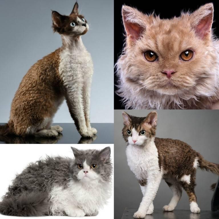 Самые спокойные породы кошек для квартиры   какие коты