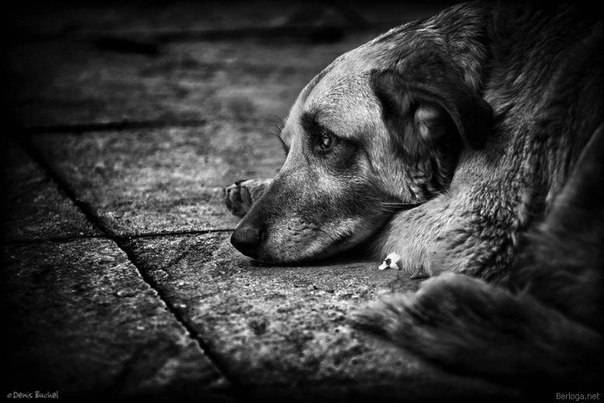 Почему моя собака плачет, когда я выхожу на улицу? — причины и лечение. — сайт эксперта по животным — howmeow