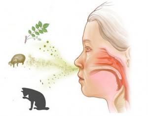 Кот чихает что делать, причины, лечение, профилактика