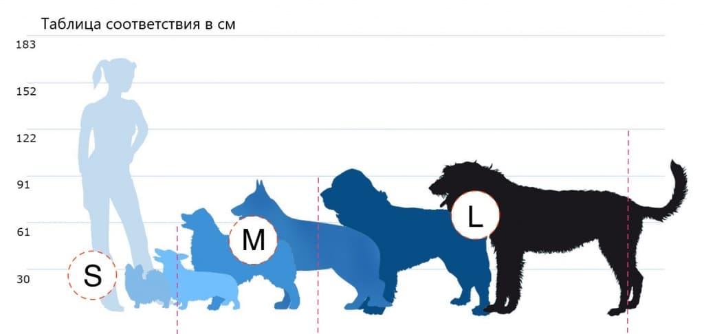 Маленькие породы собак: топ-20 с описанием и фото   dogkind.ru