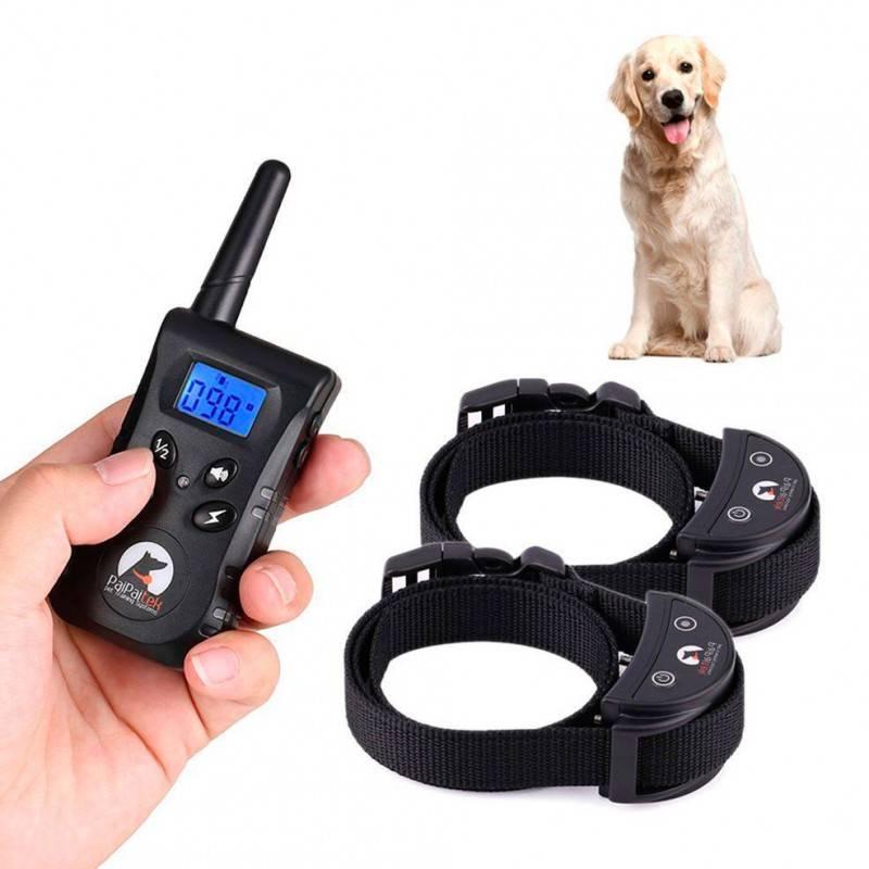 Элетронный ошейник: электроошейник для дрессировки собак - wikipet.ru