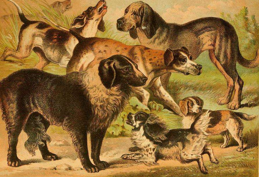 История происхождения собаки