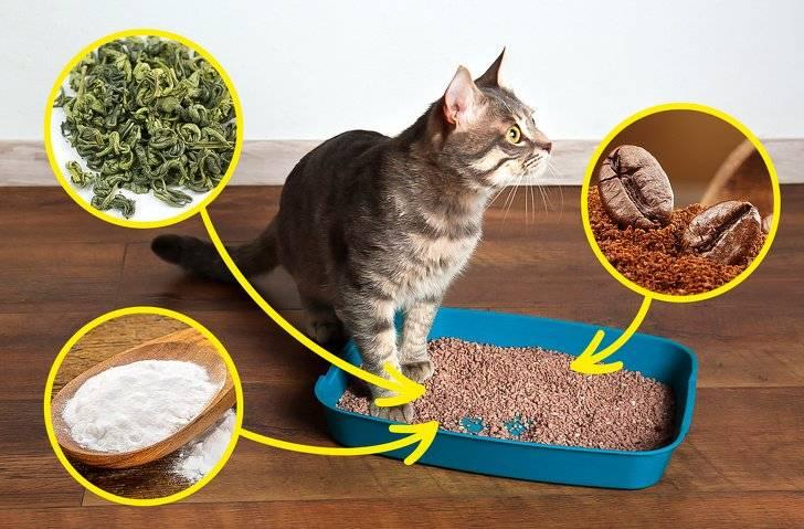 Почему кошка перестала ходить в лоток и как исправить ситуацию