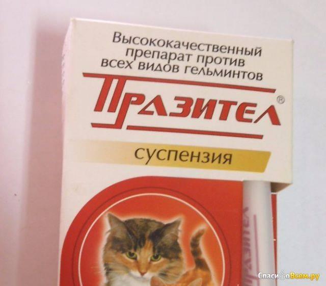 Как дать таблетку котенку от глистов – средства и методы