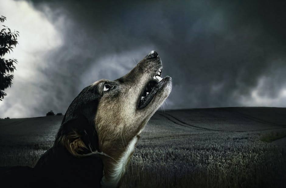 Почему собака воет по ночам во дворе: причины