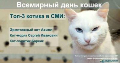 Праздник день кошек:  всё о праздновании и истории дня котов