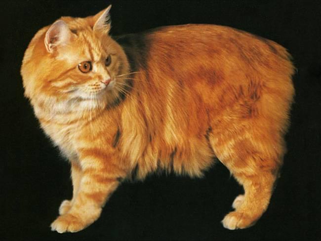 Породы кошек: описание всех видов и список с названиями по алфавиту