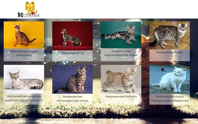 Породы кошек — список с названиями и фото