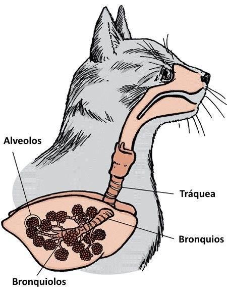 Кошка тяжело сопит и хрюкает носом при дыхании: причины, диагностика и лечение