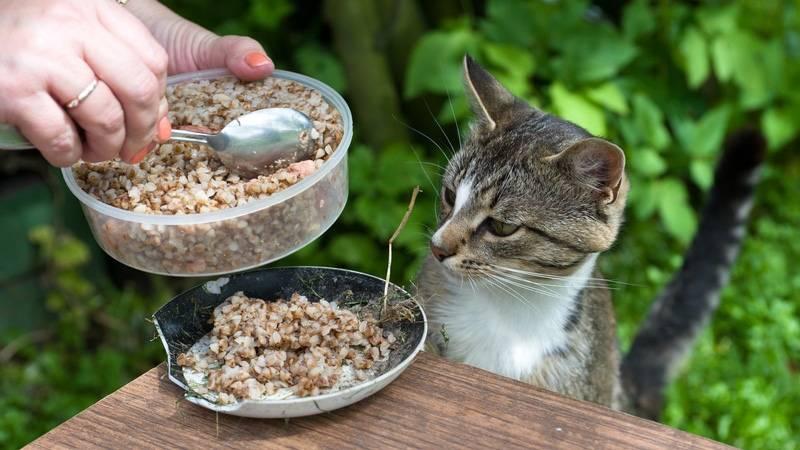 Как помочь кошке в жару?