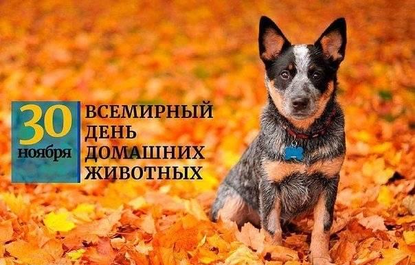 День собак какого числа