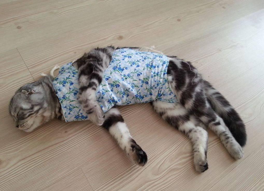 Стерилизация и послеоперационный уход за кошкой - ветеринарная клиника zoohelp