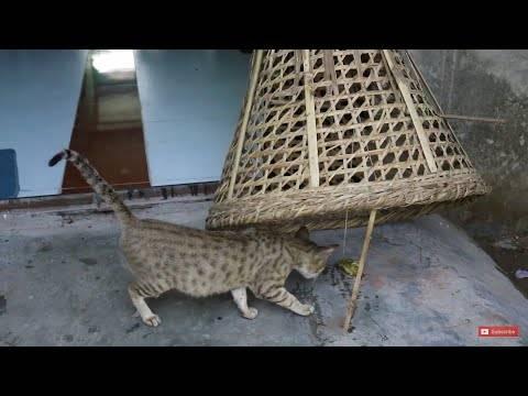 Как приручить дикого котенка, которого взяли с улицы