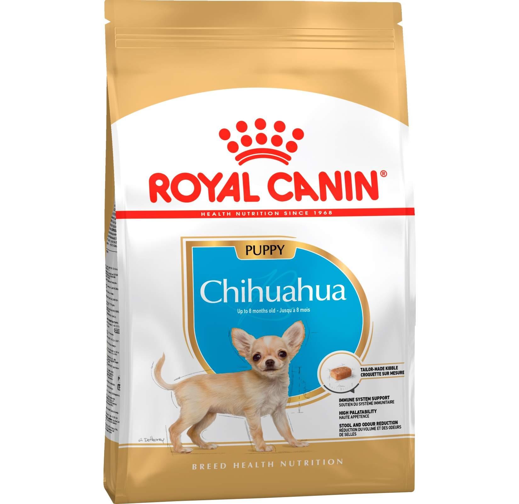 Чем кормить чихуахуа: крошка всеядна, но тоже хищник и любит мясо!