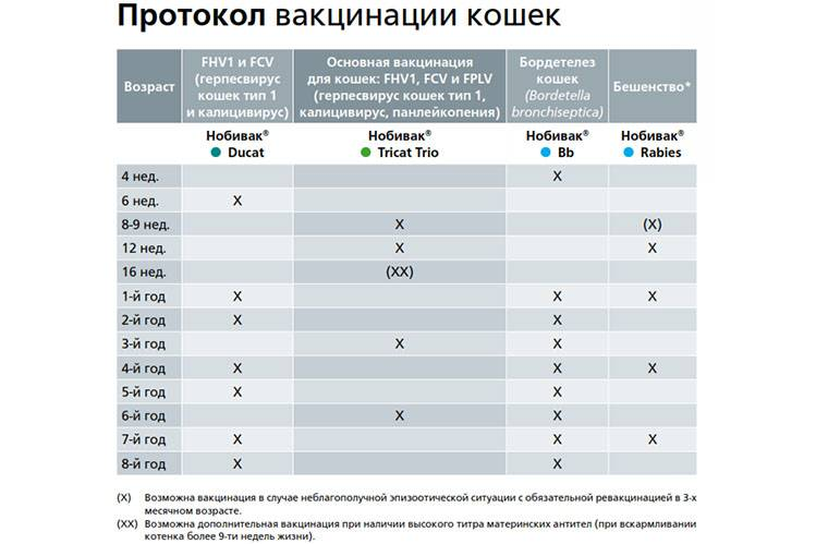 Прививки собакам по возрасту, таблица