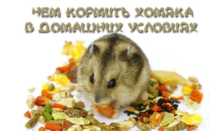 Приятного аппетита, маленький хомячок!