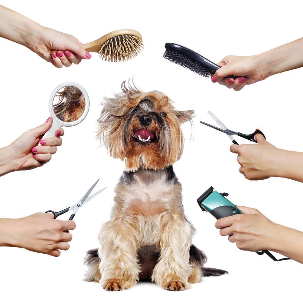 Как называется человек который стрижет собак. стрижка собак и кошек: какое заведение открывать