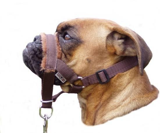 Недоуздок для собак: что это такое и как сделать своими руками