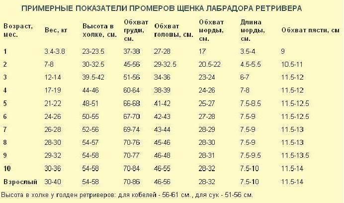 Таблица веса чихуахуа стандарт породы