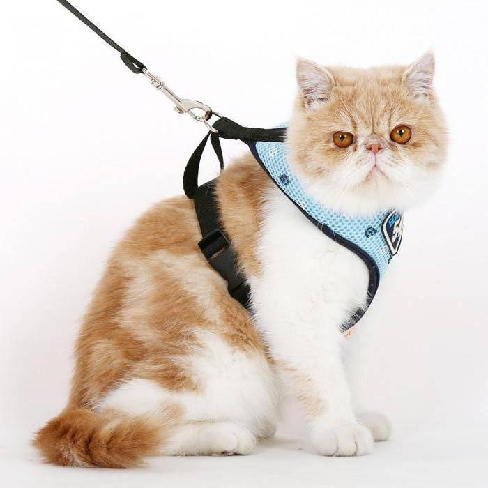 Шлейка для кошки своими руками