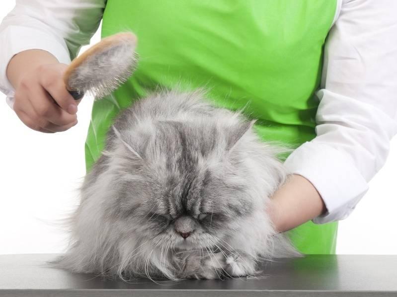 Как бороться с выпадающей шерстью кошек в квартире: ? съемные чехлы, вакуумные приспособления, липкие помощники, влажная уборка, быстрое избавление от линьки кошек