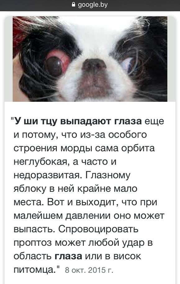 У собаки выпадают глаза: почему это происходит и что нужно делать?