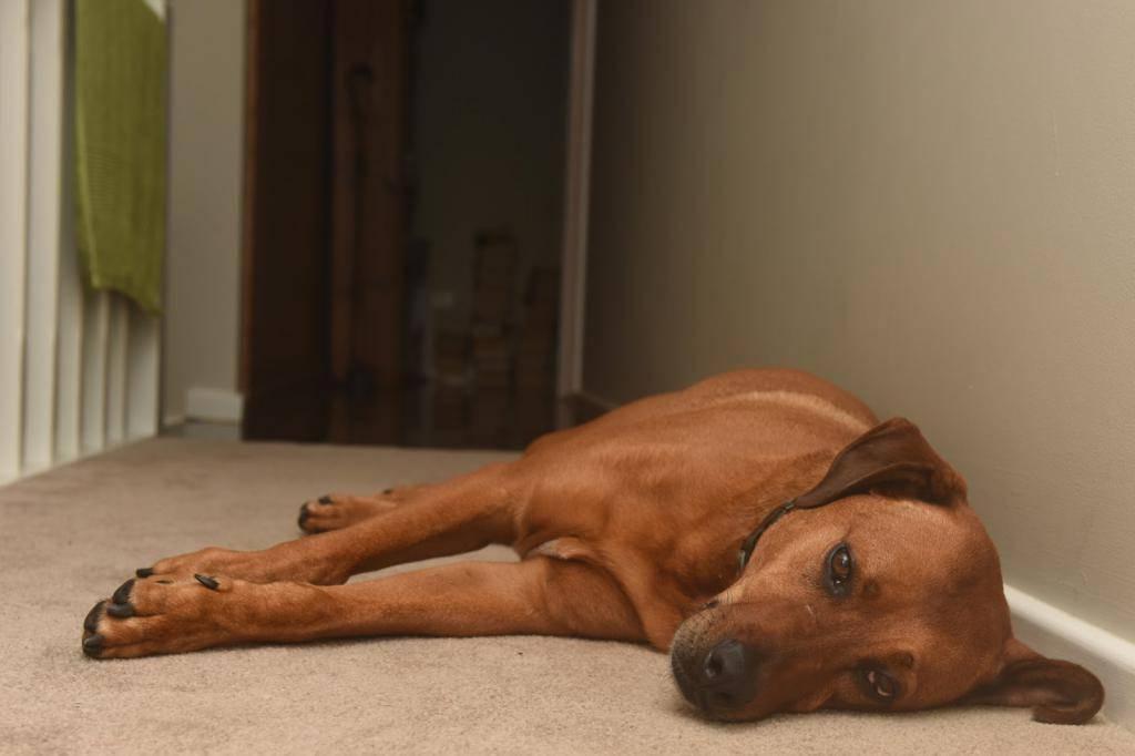 Что делать, если собака всего боится | dogkind.ru