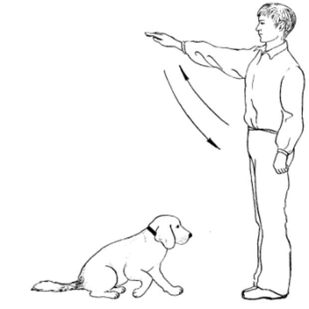 Окд для собак - какие команды и навыки изучаются в процессе курса