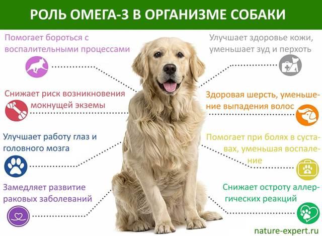 Сколько еды давать собаке в день
