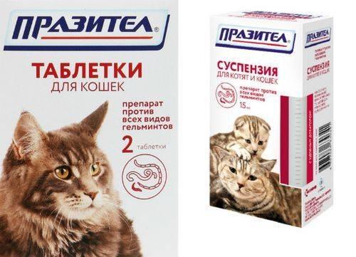 Суспензия празител для котят и кошек — основные свойства, инструкция по применению