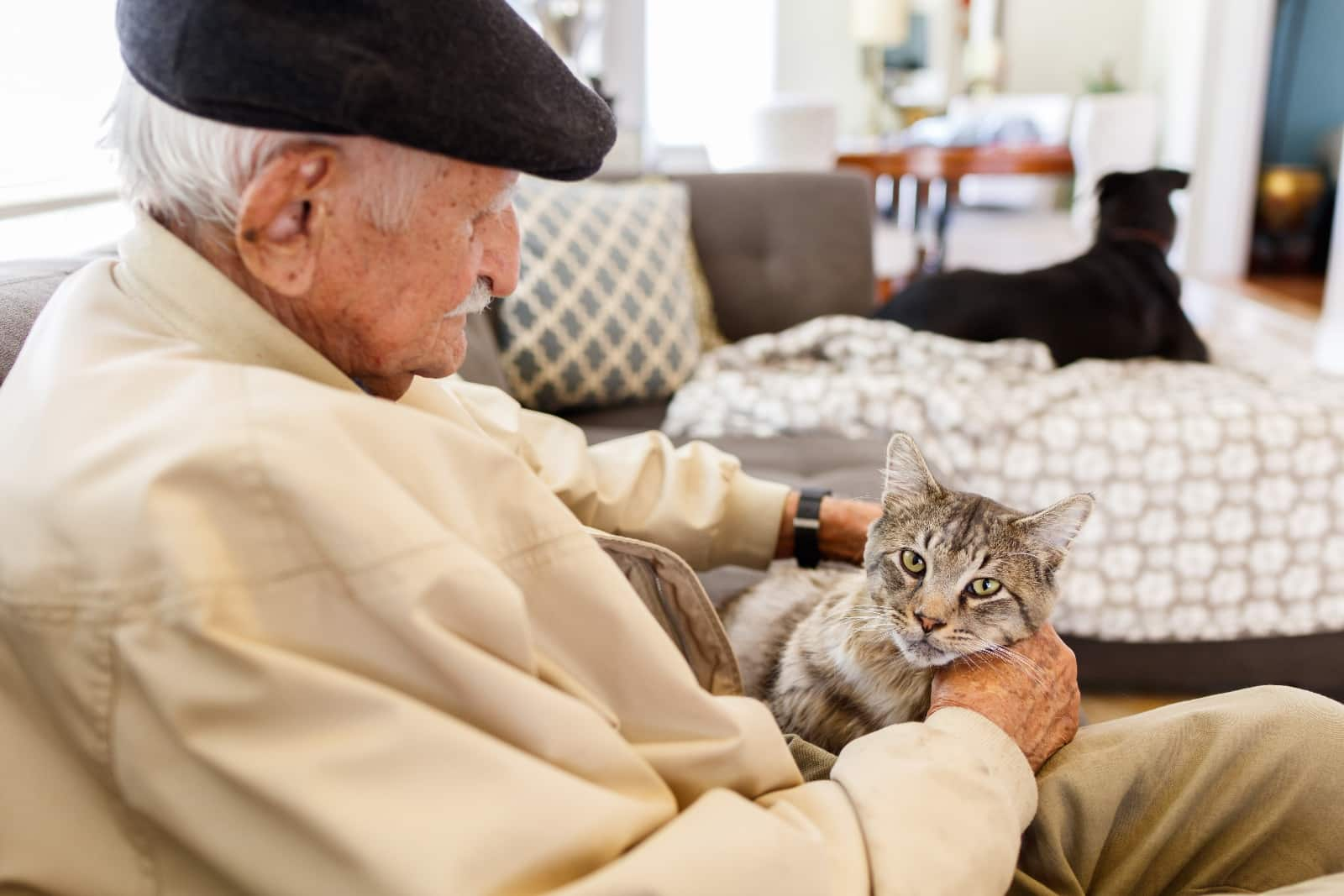 Как ухаживать за старой кошкой: советы и правила как ухаживать за старой кошкой: советы и правила