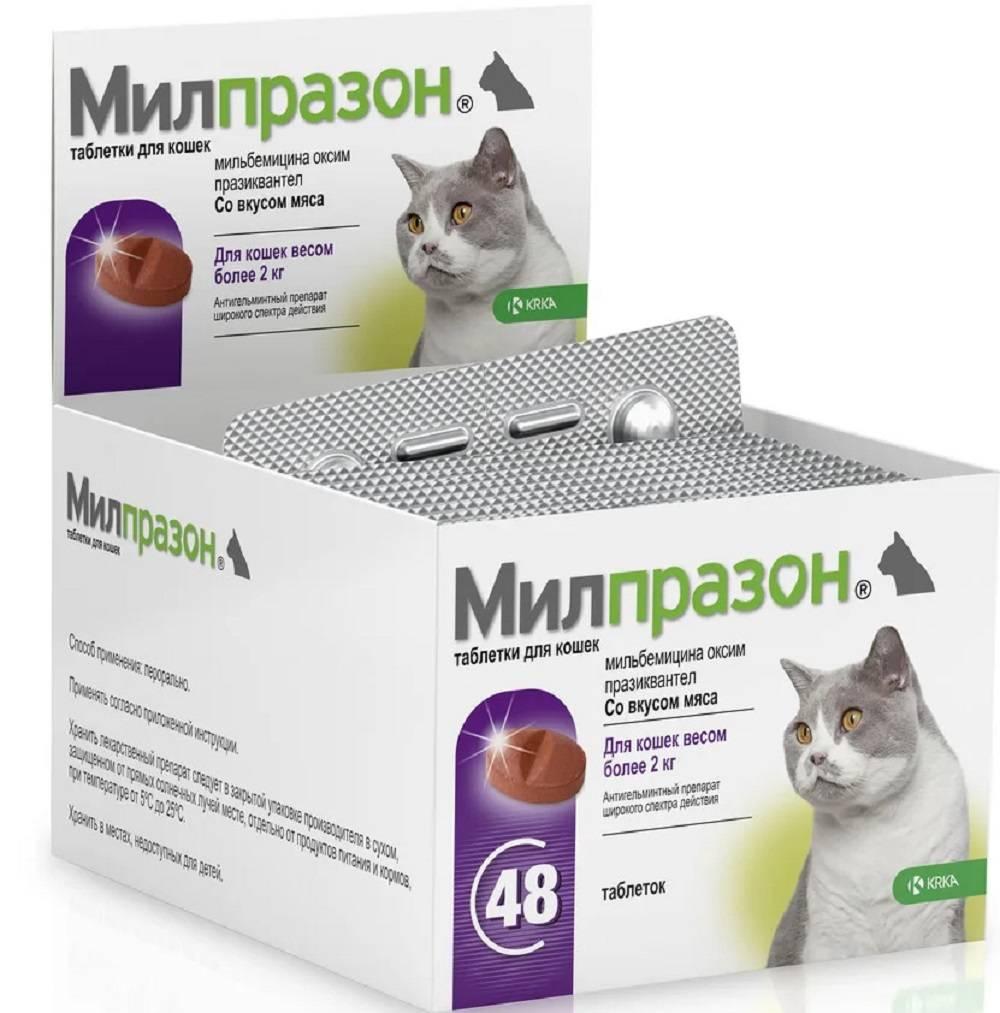 Милпразон для кошек: инструкция по применению, показания и противопоказания, побочные действия, отзывы и аналоги