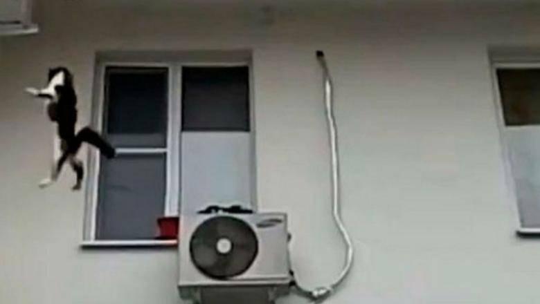 Кошка выпала из окна примета ⋆ онлайн-журнал для женщин